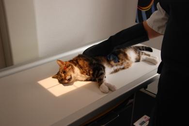 Katze auf dem Röntgentisch